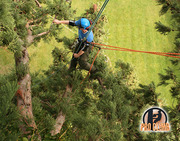 Tree Surgeons in Wexford - Pro Climb Tree Services