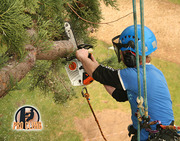 Tree Surgeons in Kilkenny - Pro Climb Tree Services