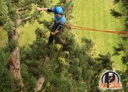 Expert Tree Surgeons in Waterford and Wexford